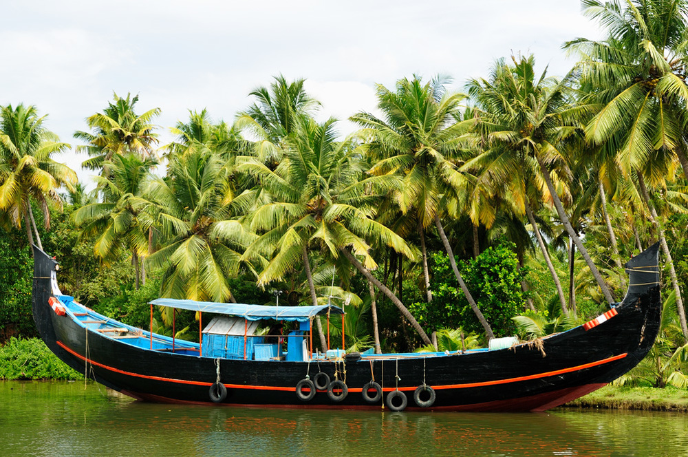 Coconut Farm - South India
