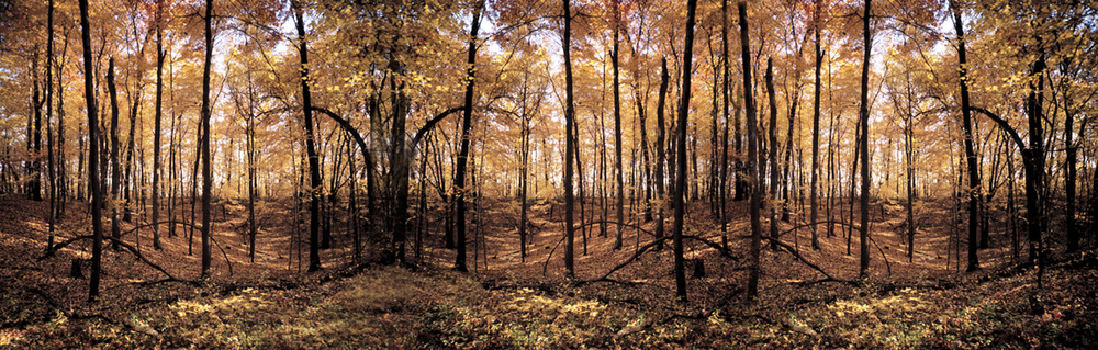 Forest3 .jpg