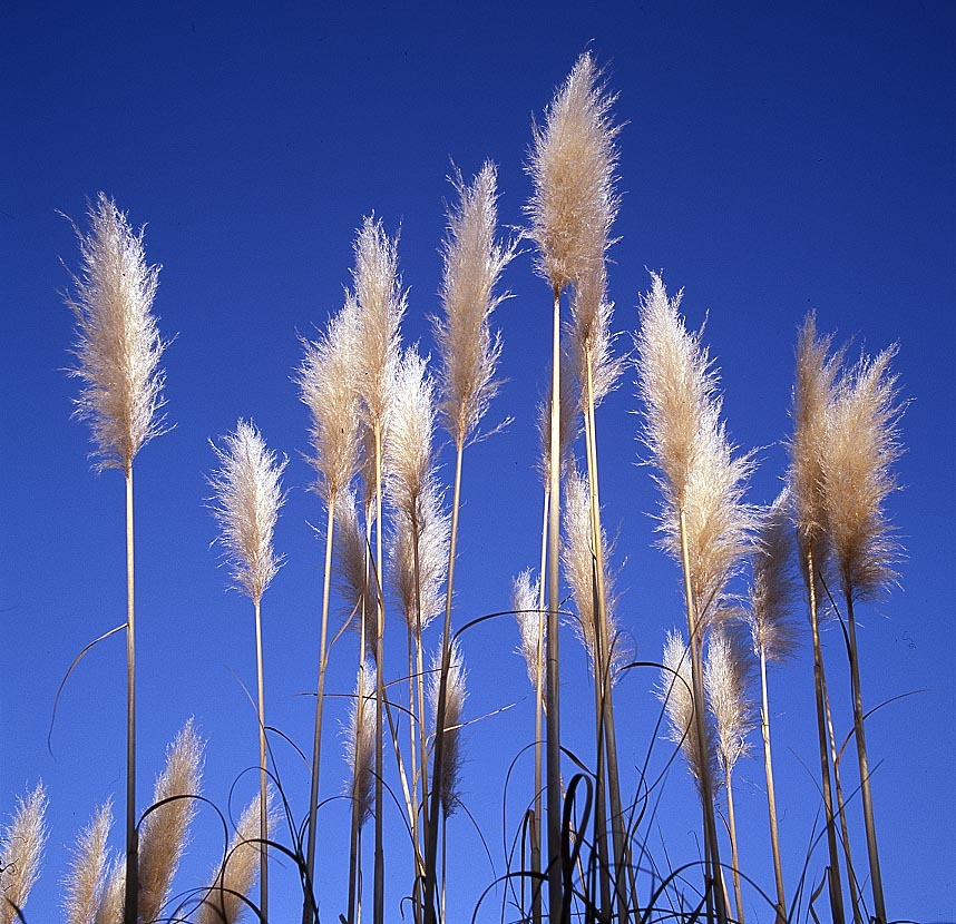 08-Cattails.jpg