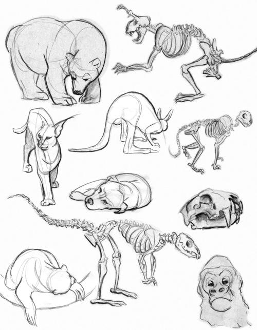 kfrick_animals.jpg