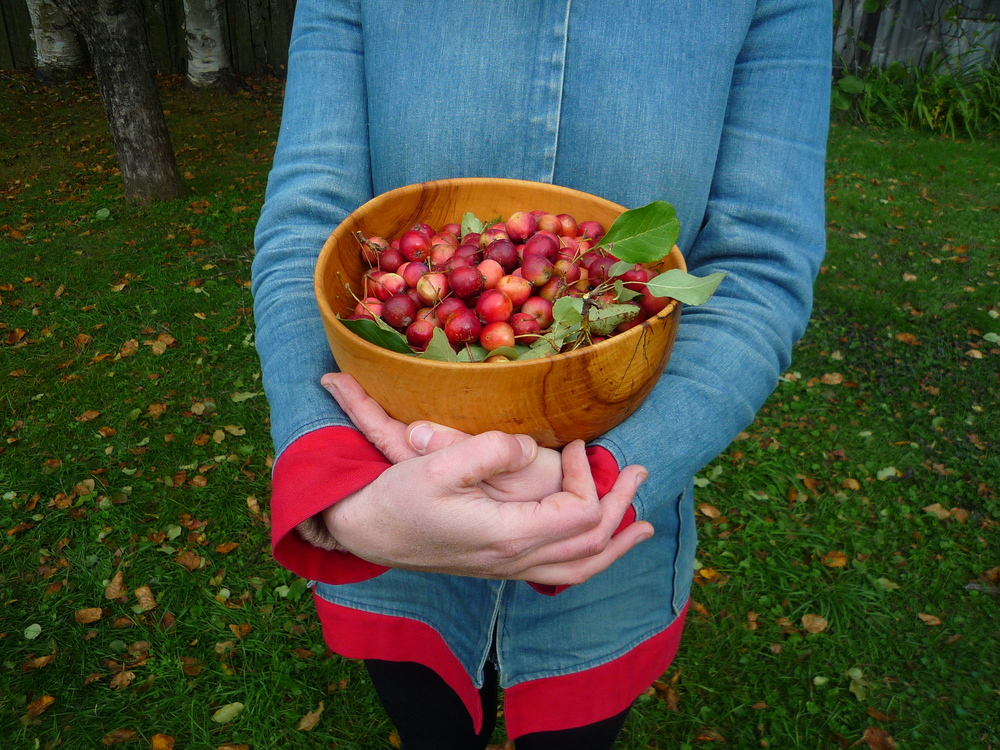 fig. d:  freshly picked crabapples