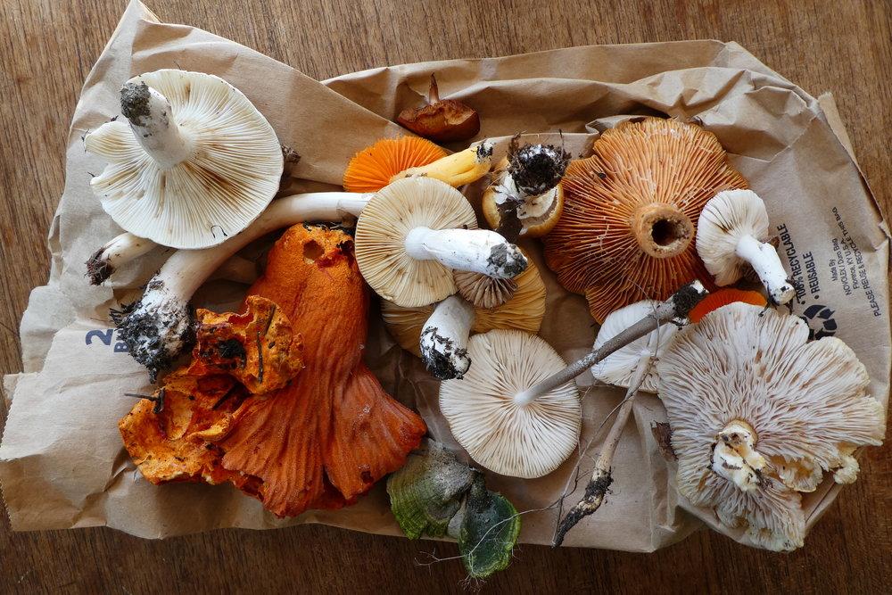 mushroom hunting.jpg
