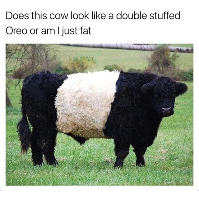👀😋🐮😂 #DoubleStuffedOreo @acollectionofawesome #yes #needthat #imfat #sorry #honestly #cookiesandcream #oreo #yum #lmao #true #creolbrothers #refreshtodeath #spreadthelove ❤️