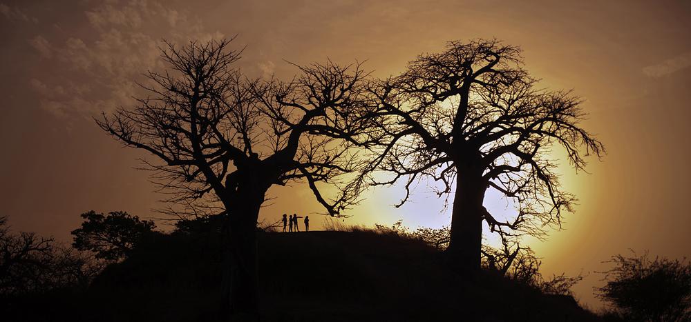 baobabs2.jpg