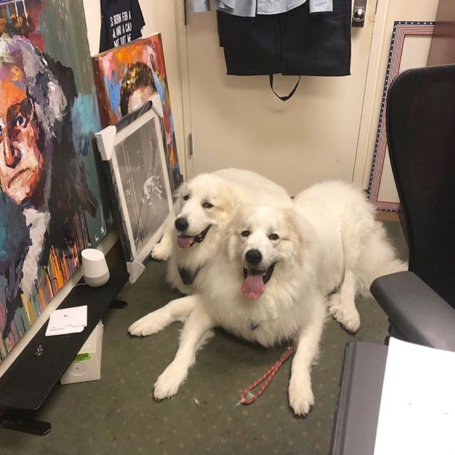 #RockyandApollo are up next on @foxandfriends!! #BringYourDogToWorkDay