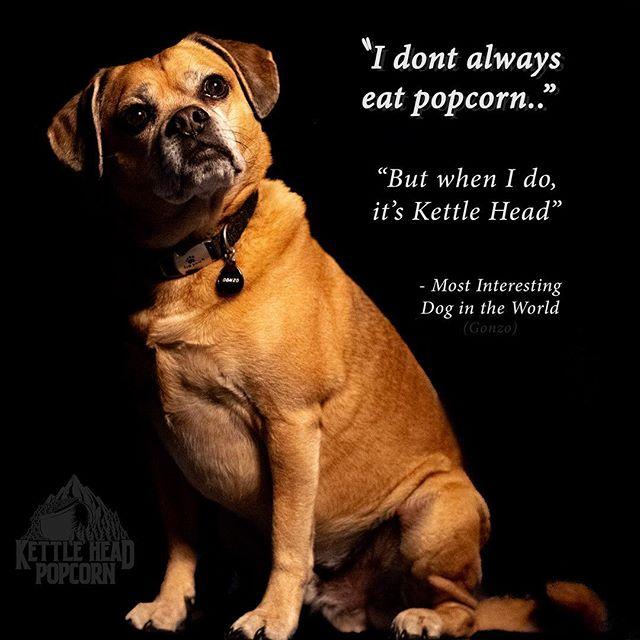 #dogsofinstagram #mostinterestingdogintheworld #popcorn