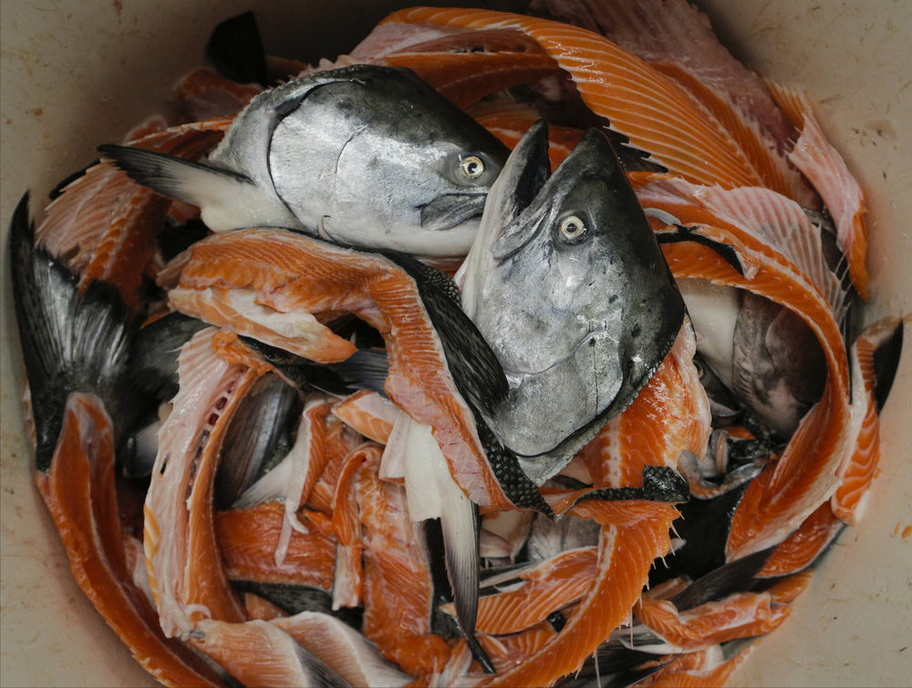 Wild king salmon carcasses are seen at the North Coast Fisheries processing plant in Santa Rosa, California, on Friday, July 17, 2015.