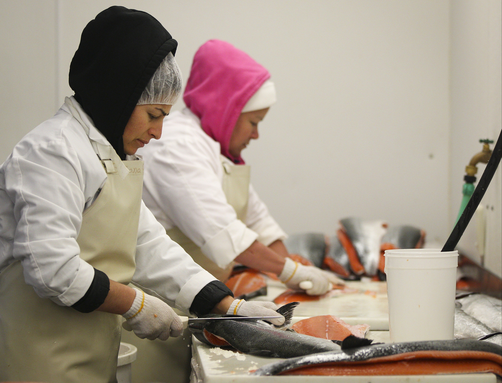 Susana Romero (left) and Maria Victoria Flores de Garcia fillet wild king salmon at the North Coast Fisheries processing plant in Santa Rosa, California, on Friday, July 17, 2015.