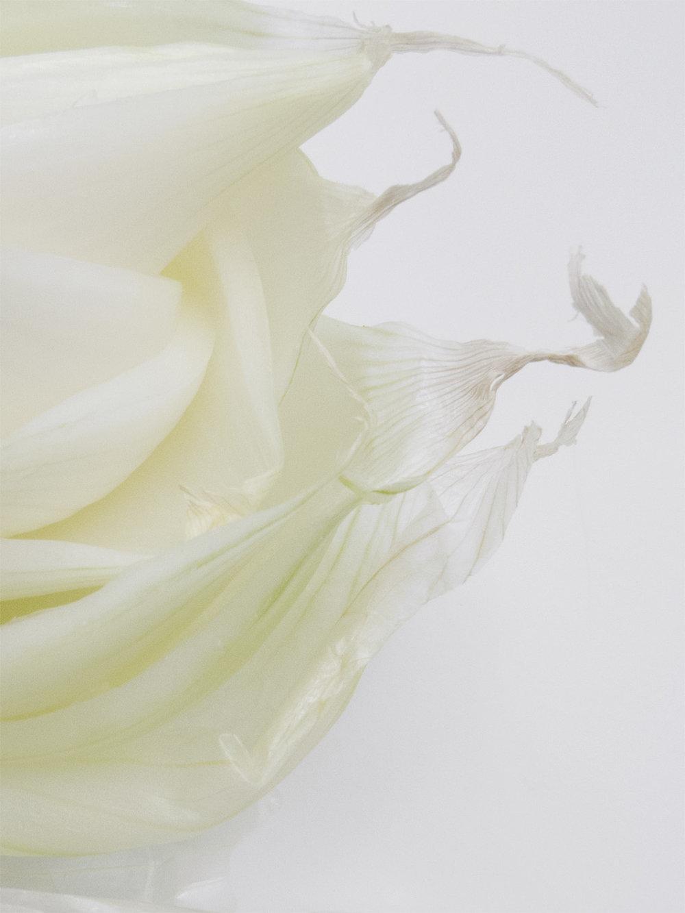 Onion_petals.jpg