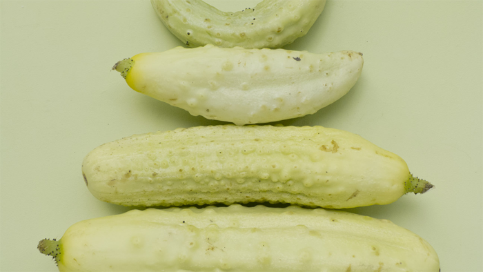 Gherkins_dissection_#1_FOODISM360.png