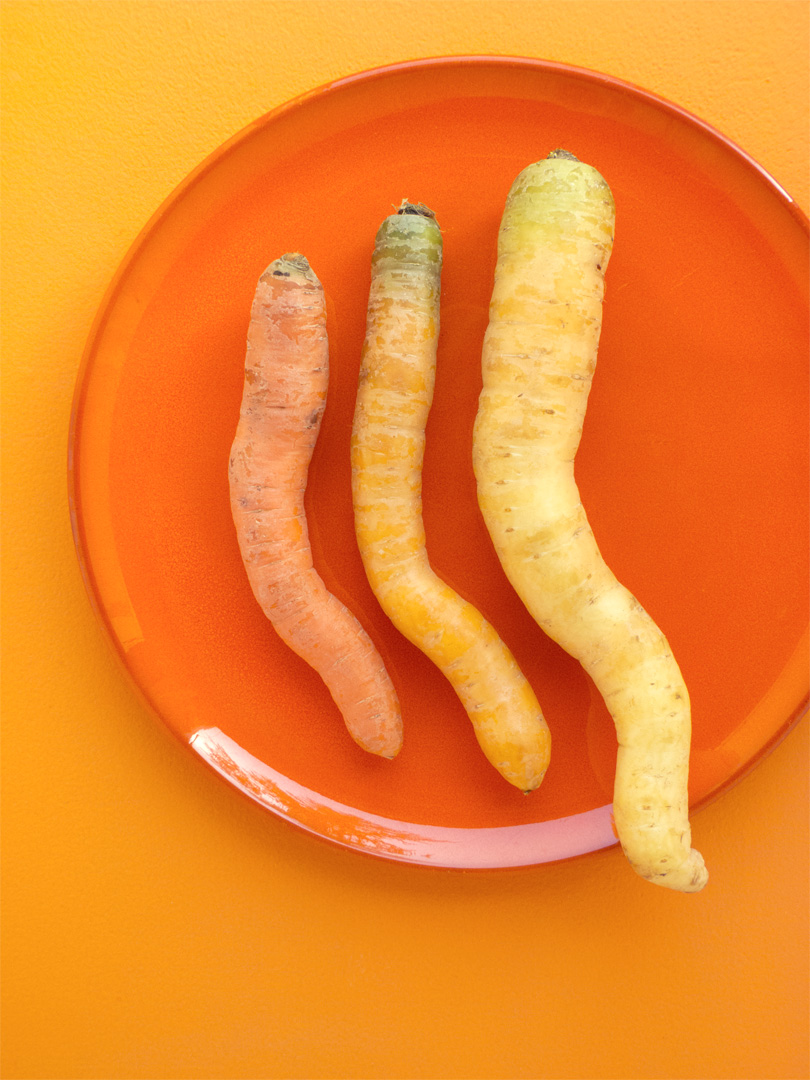 Curvy Carrots / Cream of the Crop - a trio of heirloom carrots on a vintage orange plate