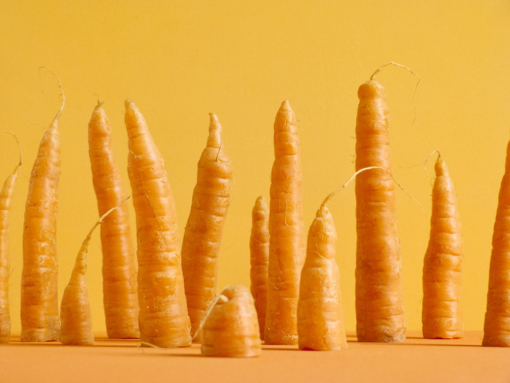 Carrotscape / Cream of the Crop - a table-top image of a landscape made of Dutch carrots