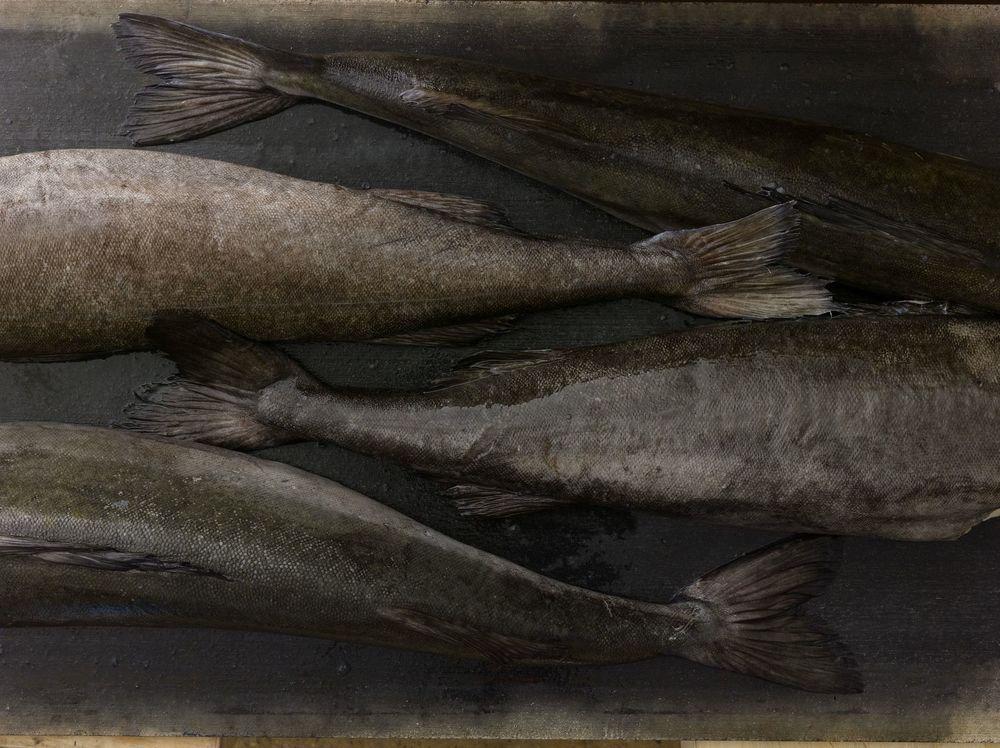 Quality & Responsibility    PREMIUM SEAFOOD    Sablefish/Black Cod