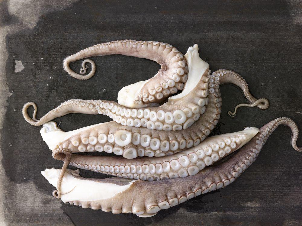 Octopus_031.jpg