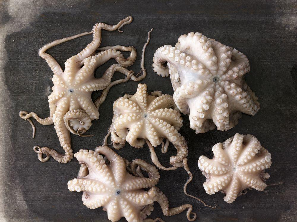 Octopus_051.jpg