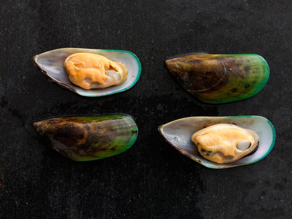 Mussels_324-cropped.jpg
