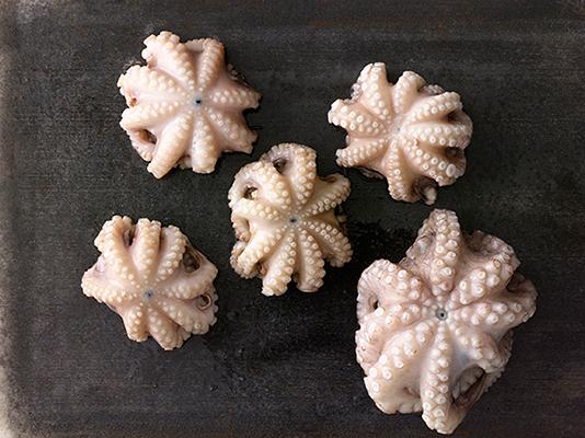 Octopus_040.jpg