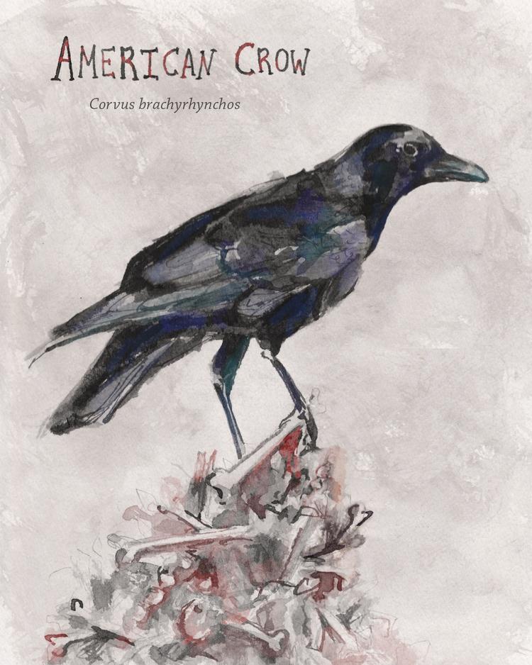 crow+cover.jpg