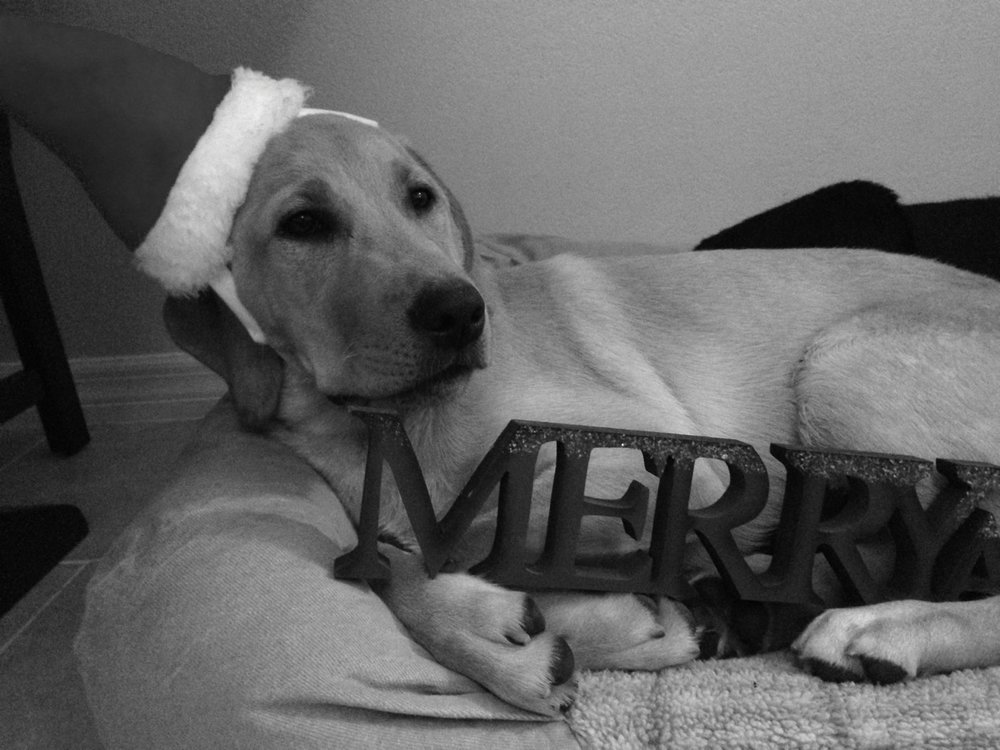 "Ruby says ""Merry Christmas"""