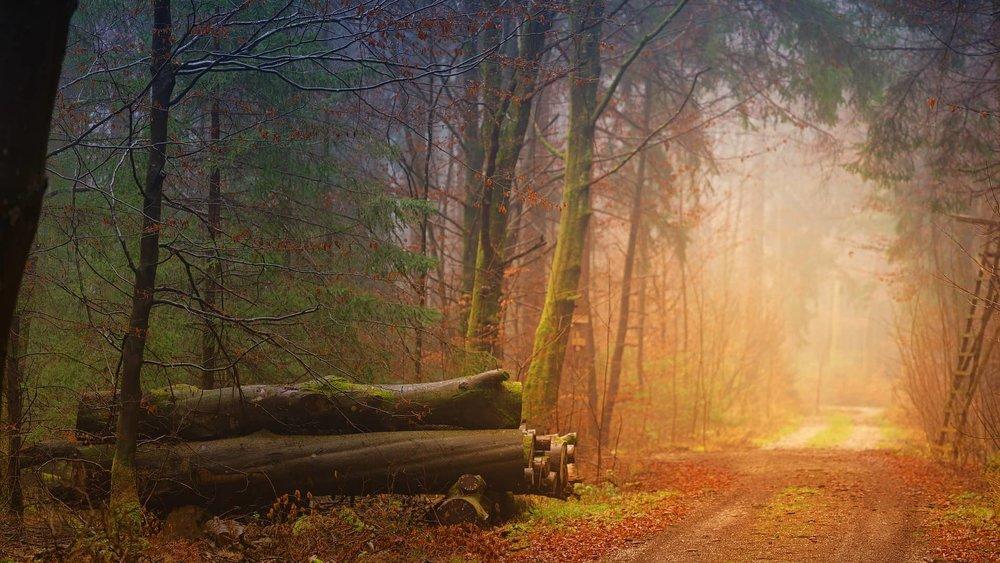 autumn_3193305_1920.jpg