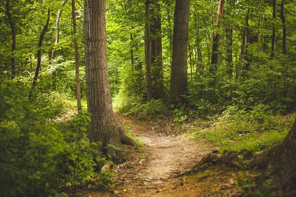 forest_1868028_1920.jpg