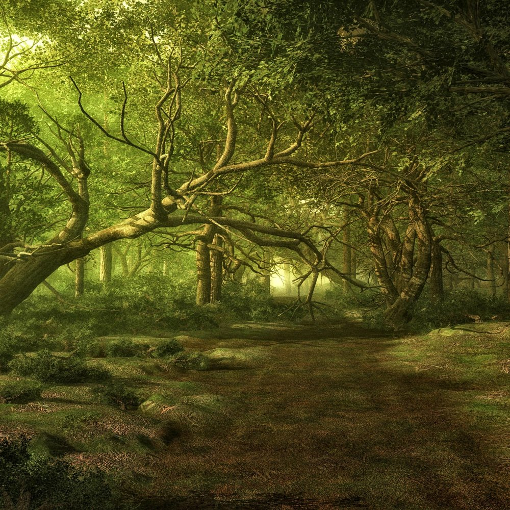 forest_1699079_1920.jpg