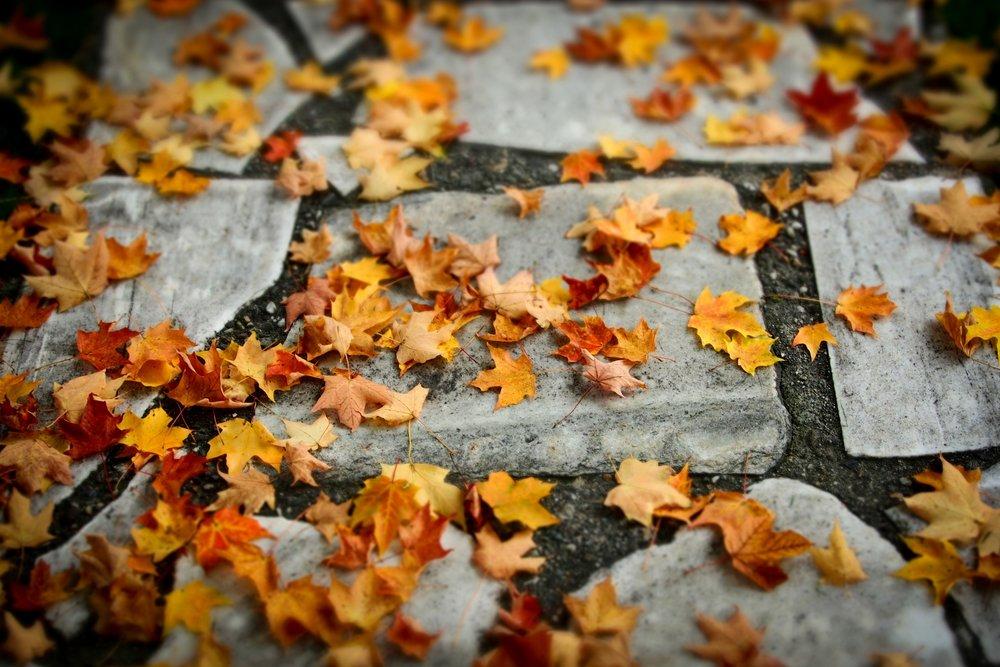 Autmun Leaves.jpg
