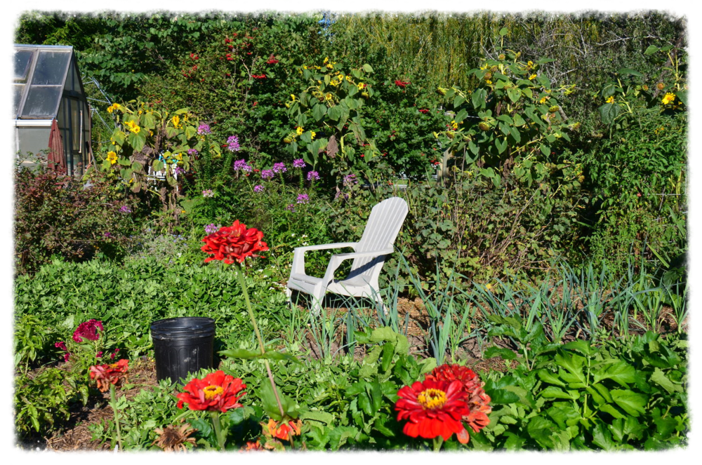 Katja's Garden