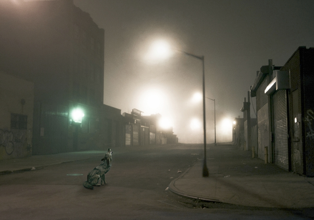 Untitled (Street Coyote), 2012_ForPrint_16x22 copy.jpg