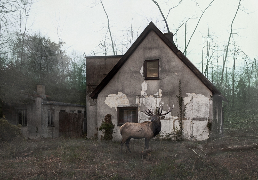 Untitled+(Deer)2012.jpg