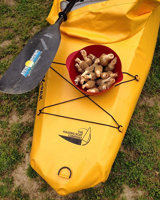 The wetlands have some of the best plants and mushrooms to forage - all convenient to get to with a K-Pak! Click the link in our bio to find out all you need to know about how to get started 👆👆👆 . . . . . #forage #foraging #hunting #mushrooms #edibleplants #kpak #kayakingadventures #kayaking #foldingboat