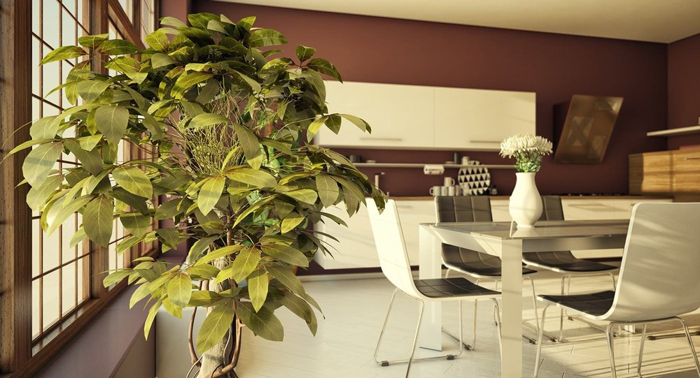 indoor-tree-inspiration.jpg