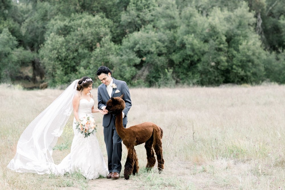 FOREVER-ALWAYS-FARM-WEDDING-FAVIO-NALLELI-SNEAK-PEEK-50.jpg