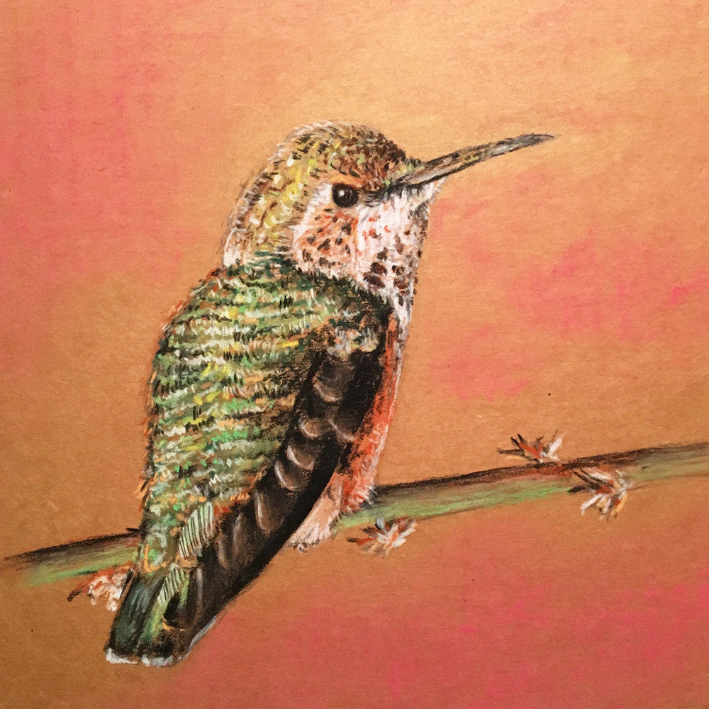 Cardboard Art, Chalk Bird Illustration
