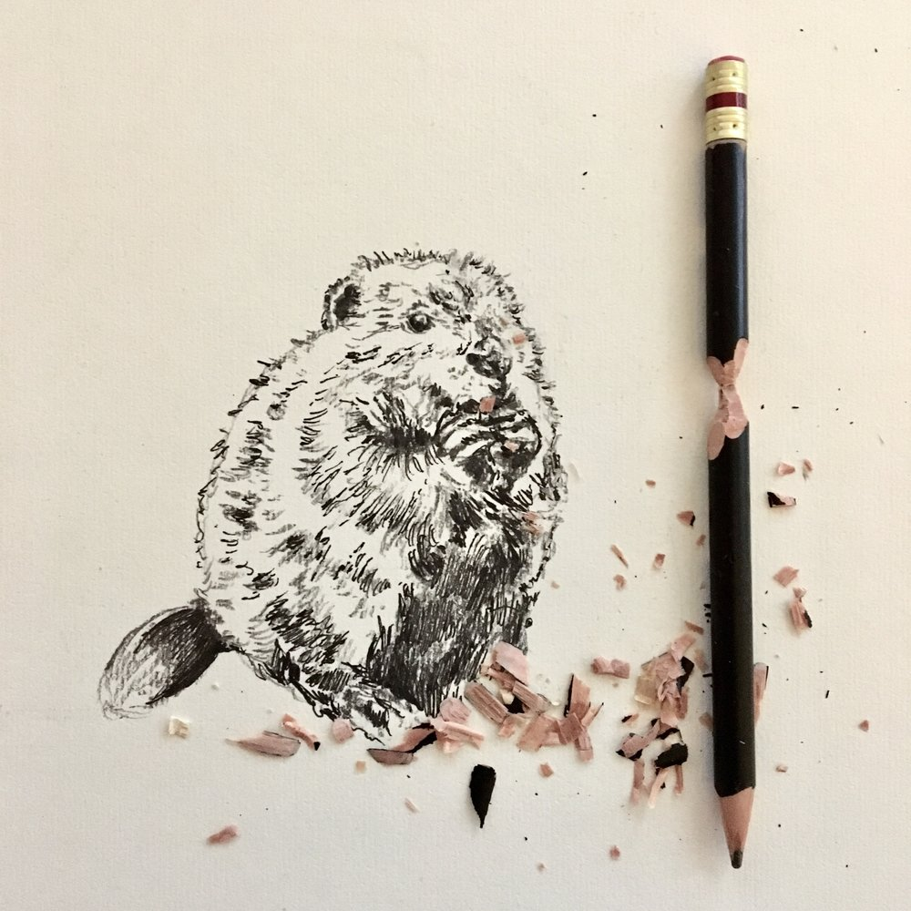 beaver-interactive-drawing-by-jordan-fretz-art.jpg