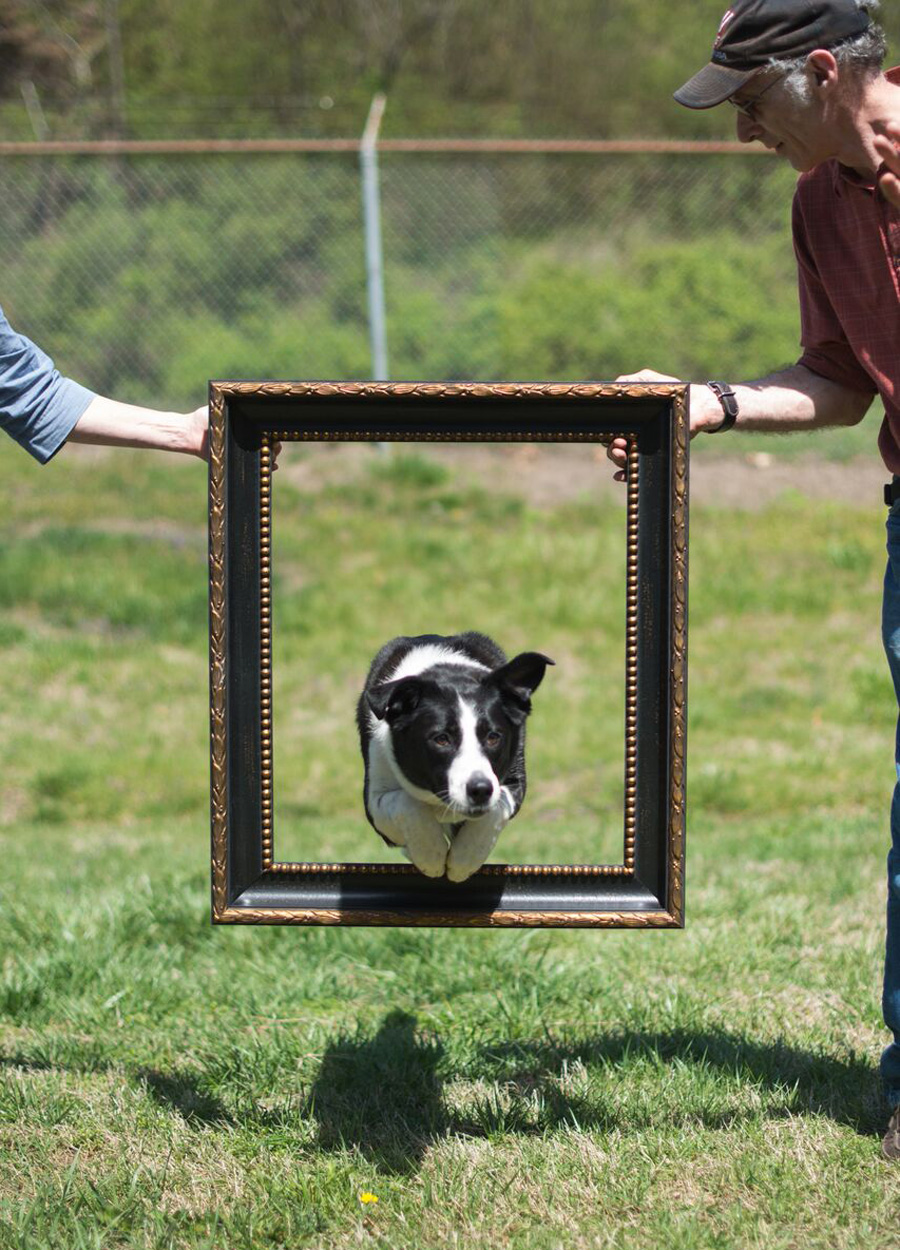 "I was amazed by this pup who jumped through the 20""x24"" frame about 30 times!"