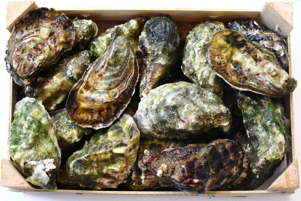 Click on photo to watch video on how to open oysters  Clique na foto para ver video sobre como abrir ostras