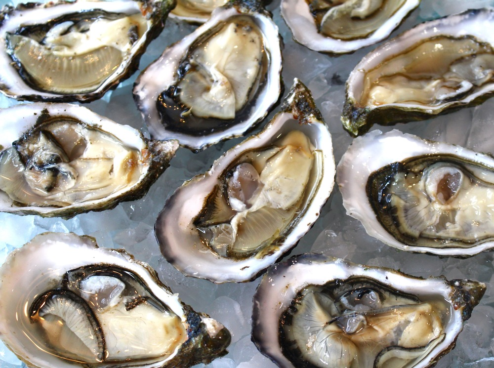 www.aquaprimeoysters.com