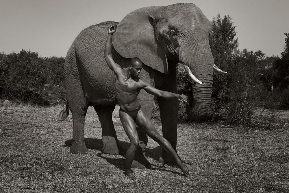 Jamar_elephant.jpg