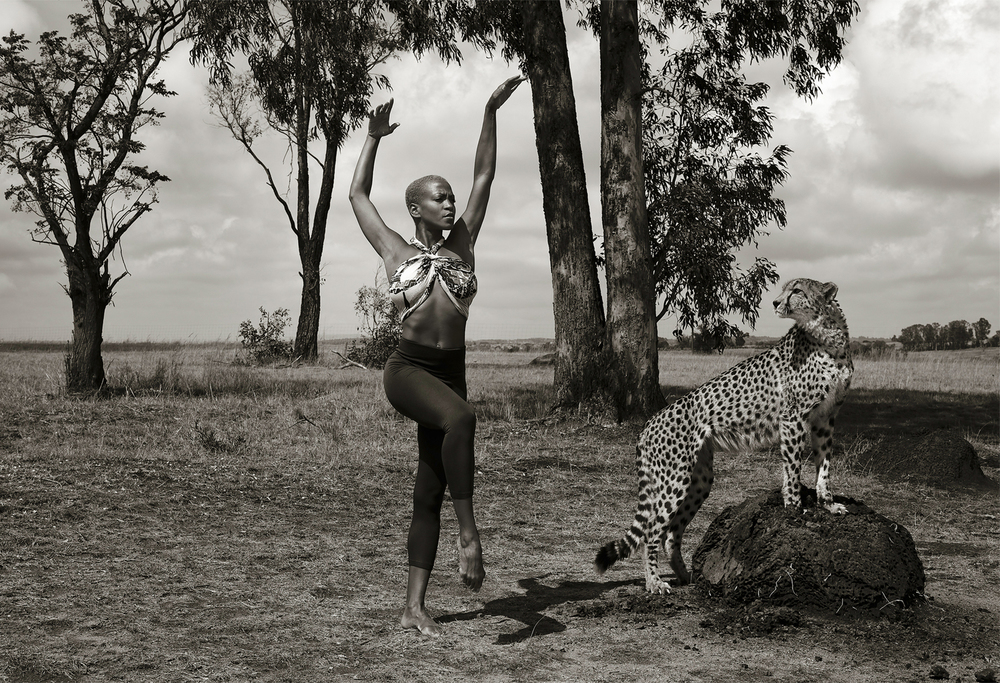 ailey_cheetah.jpg