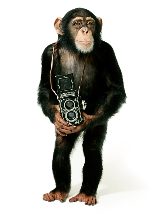 chimp01++.jpg
