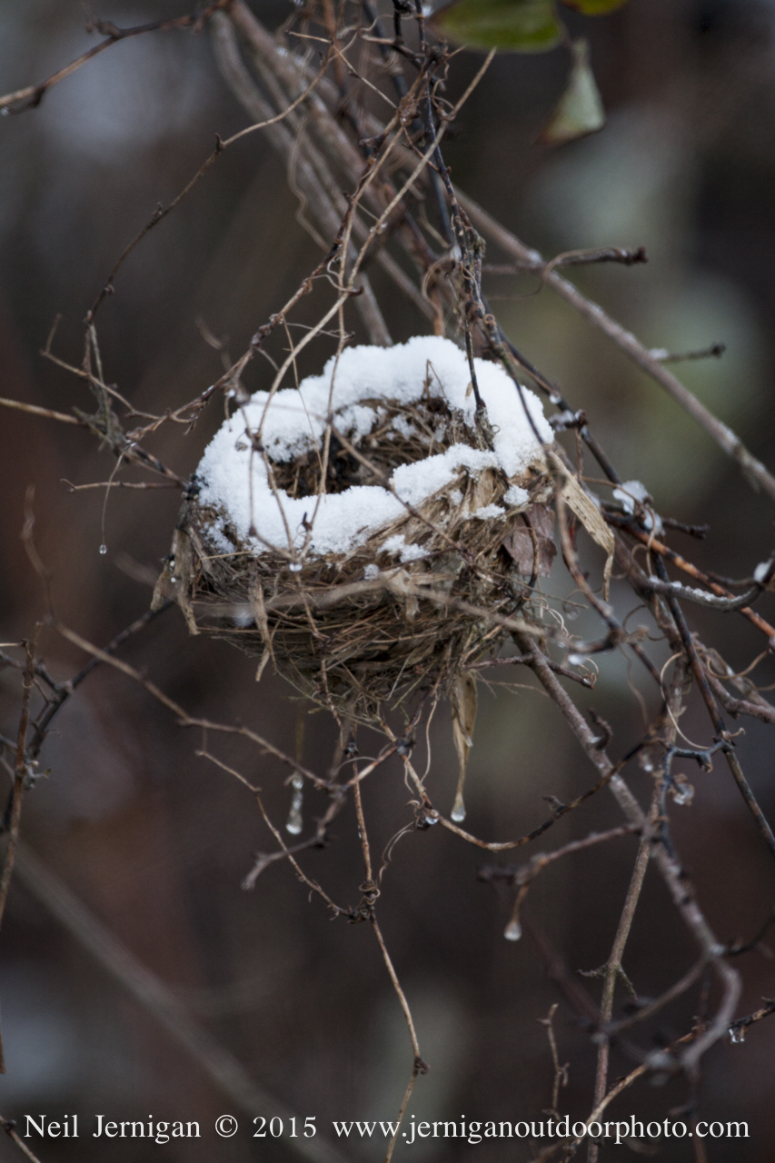 Snow covered the rim of an old birds nest