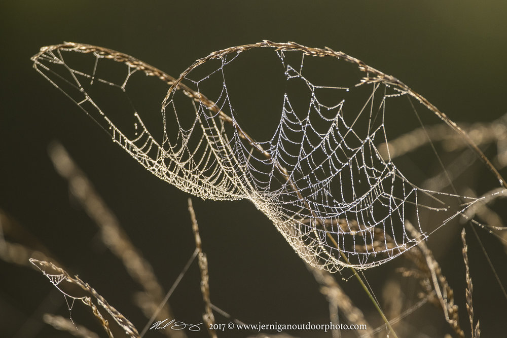 Sunlight shinning on a dew covered spider web