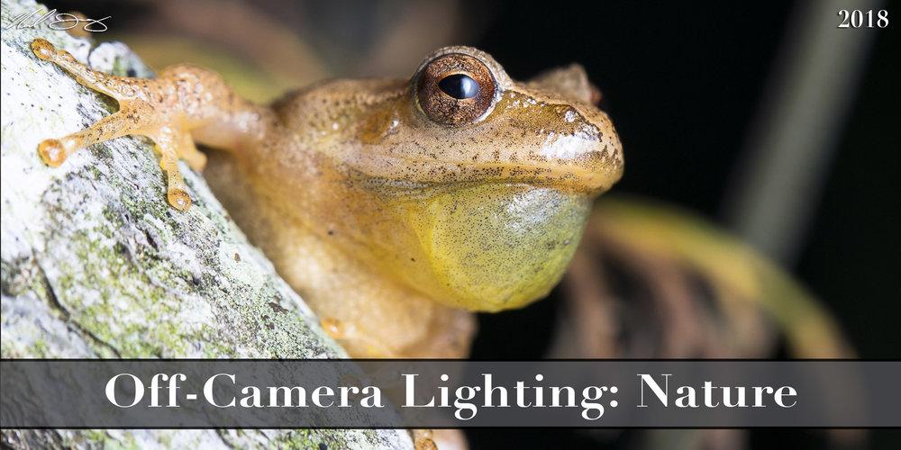 Nature Light.jpg