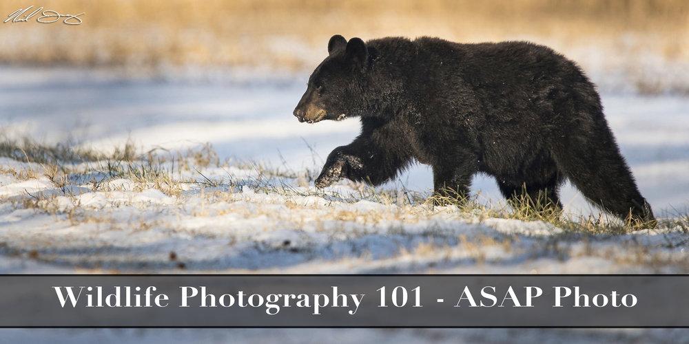 wildlife 101.jpg