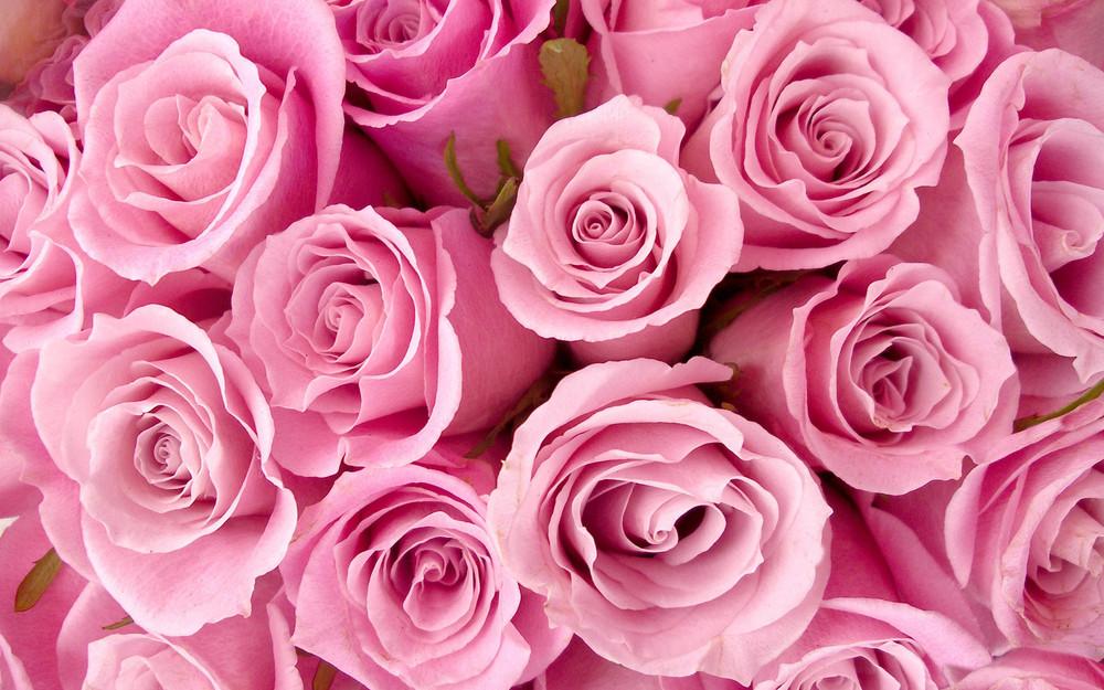 special_pink_roses-wide.jpg