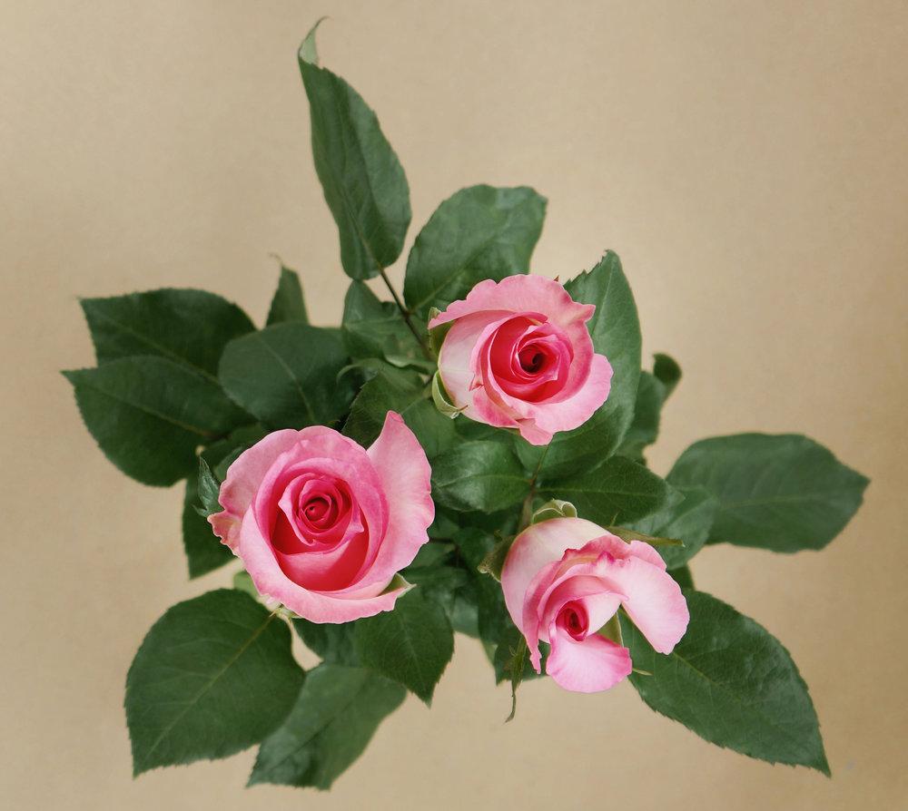 priceless timana flowers