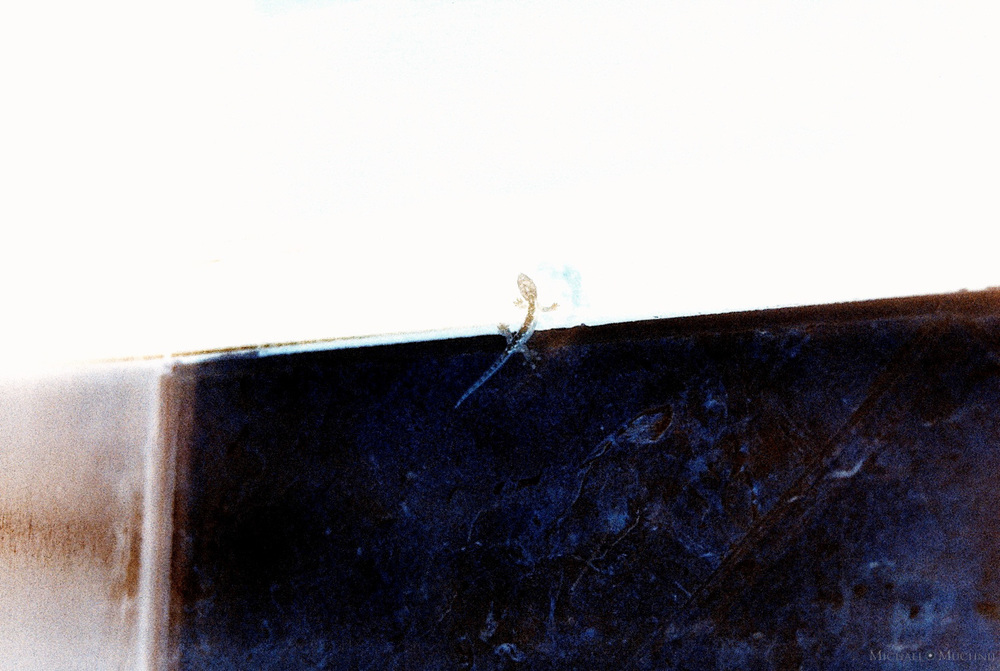 Minolta-87.jpg