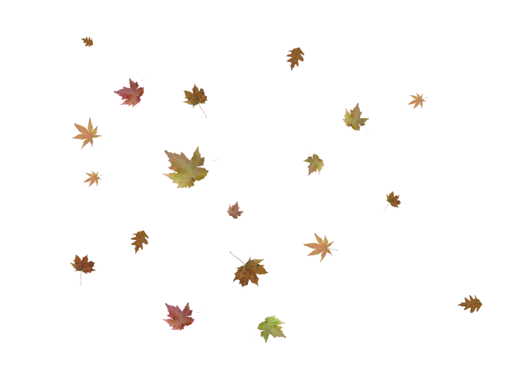 falling-leaves-png-6.png