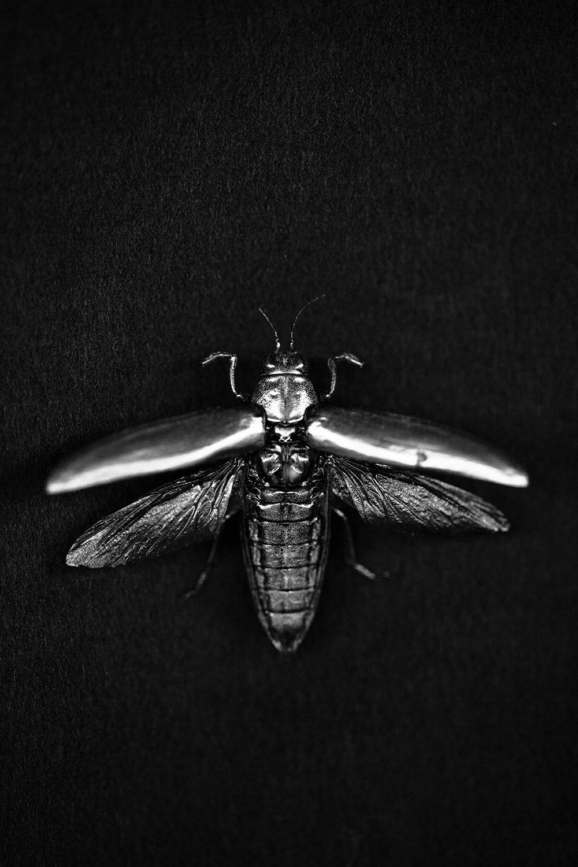 bug06B.jpg